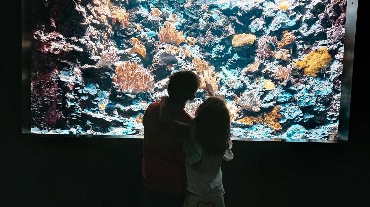 Acuario de Gijón. 400 especies de animales acuáticos de agua dulce y salada